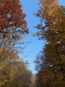 Fall foliage at Bandy Creek Campground